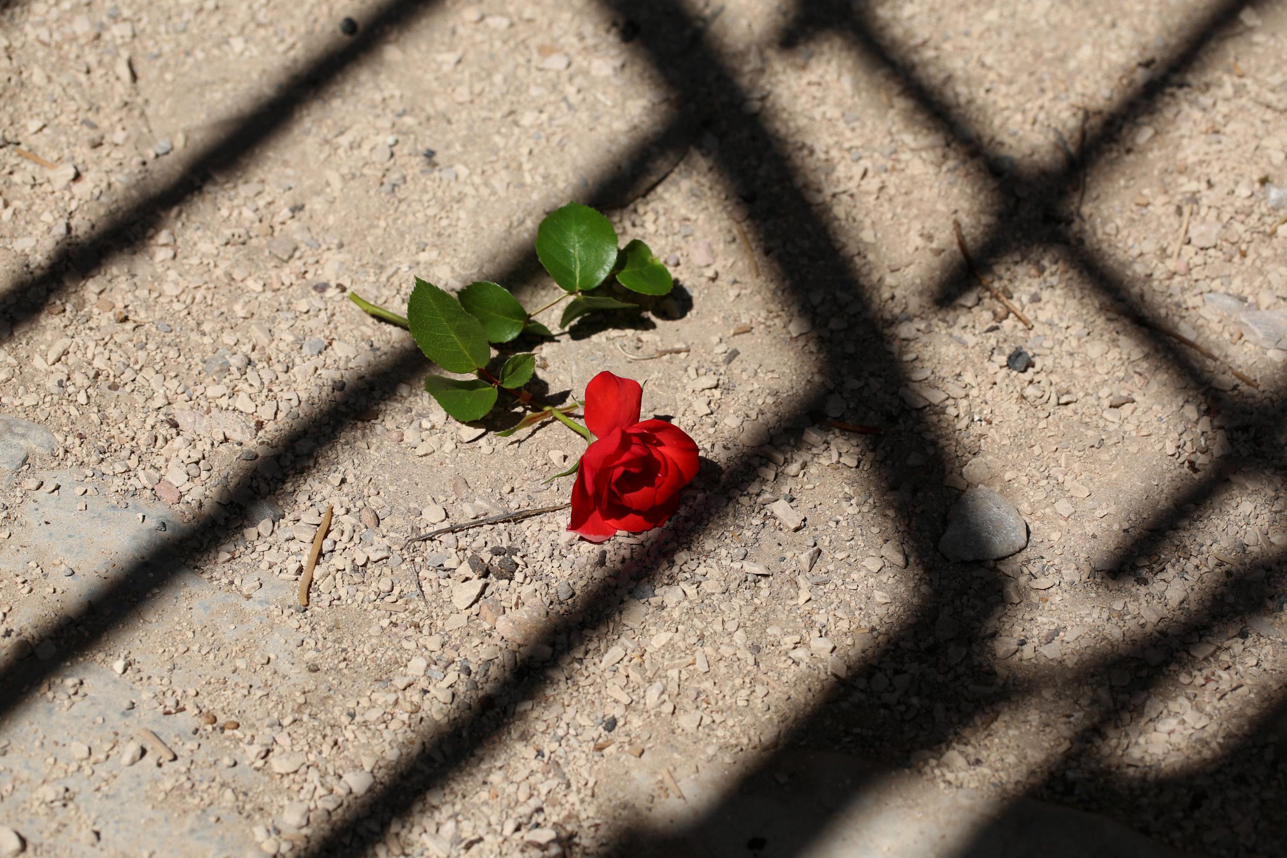 Les Roses Rouges Sur le Bitume